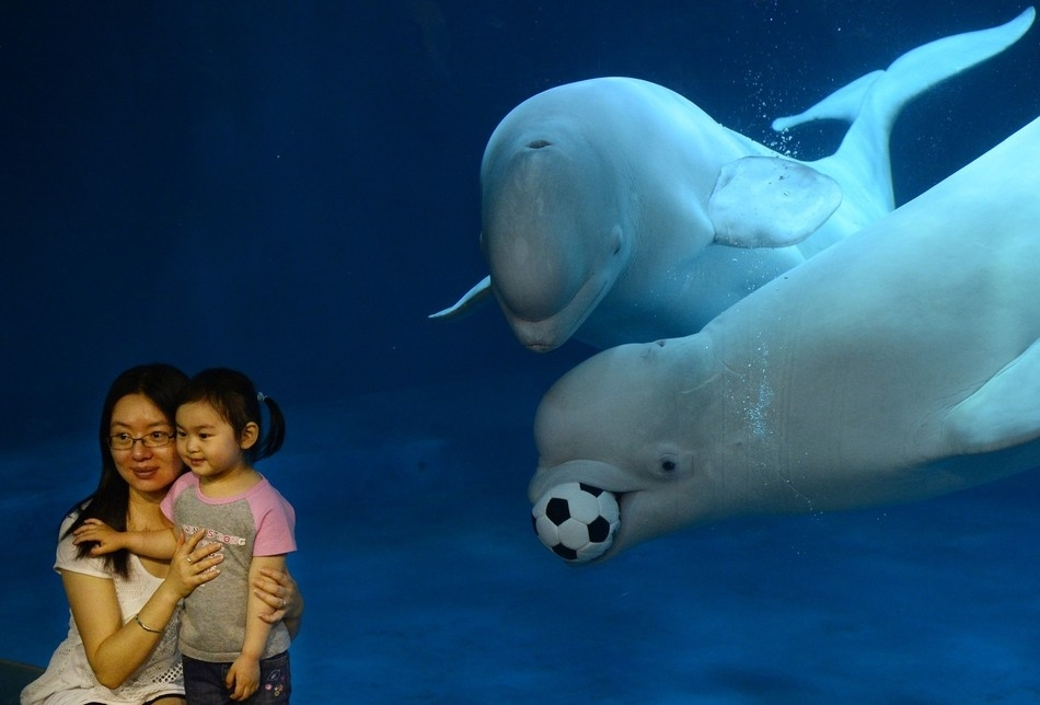 Images: Can whales play football? - Firstpost