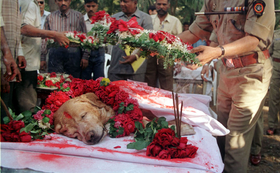 A senior police officer lays a floral wreath on Mumbai's most famous dog Zanjeer, who worked with the Bomb Squad, following his death from bone cancer in the city, November 17, 2000.Zanjeer, a golden labrador, saved thousands of lives during the serial bomb blasts in the city in March 1993 by detecting more than 3,329 kgs of the explosive RDX, 600 detonators, 249 hand grenades and 6406 rounds of live ammunition. He was buried with full honours during a ceremony attended by senior police officials. Reuters
