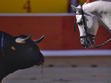 A bull during the Spanish bull run. AP