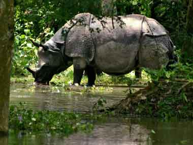 Assam Governor expressed concern over rhino poaching in the state. PTI