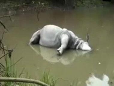 The rhino who was killed. Image courtesy: Twitter/ANI