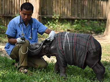 Indian veterinarian Panjit Basumatary(L)examines a 12 day-old male rhino calf at The Centre for Wildlife Rehabilitation and Conservation facility at Kaziranga National Park in the north-eastern Indian state of Assam on March 24, 2016. Wearing a red and grey-striped blanket, a 12-day-old baby rhinoceros is bottle-fed by keepers at a wildlife rehabilitation centre in northeast India, after being found alone in a remote forest region. AFP