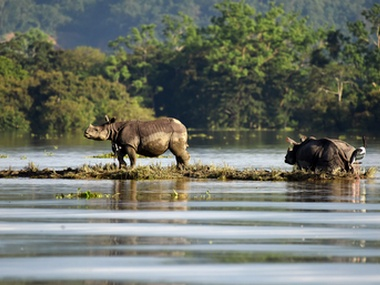 Assam floods: Over 200 animals died in Kaziranga National Park since 10 August, reveals govt report