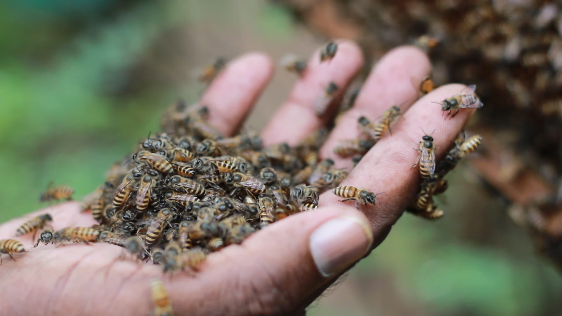 Meet Johnson Jacob — the man famous for being Mumbai's lone beekeeper