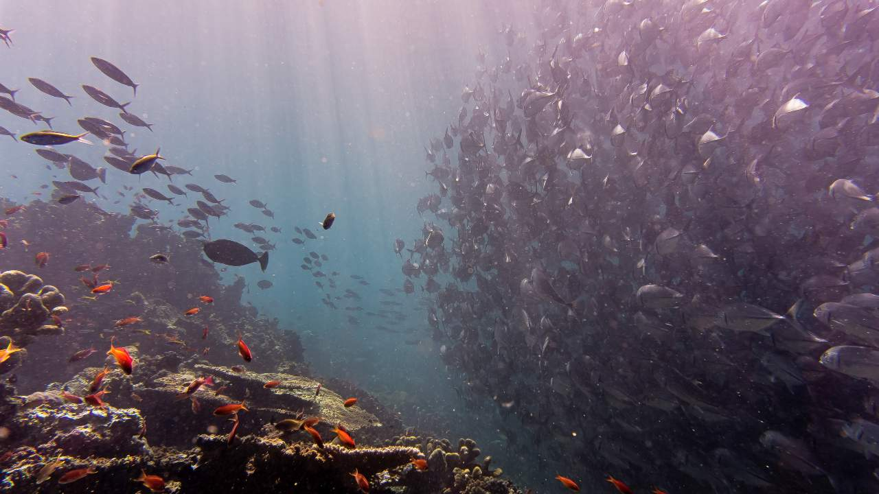 A glimpse of marine life just beneath the ocean surface.