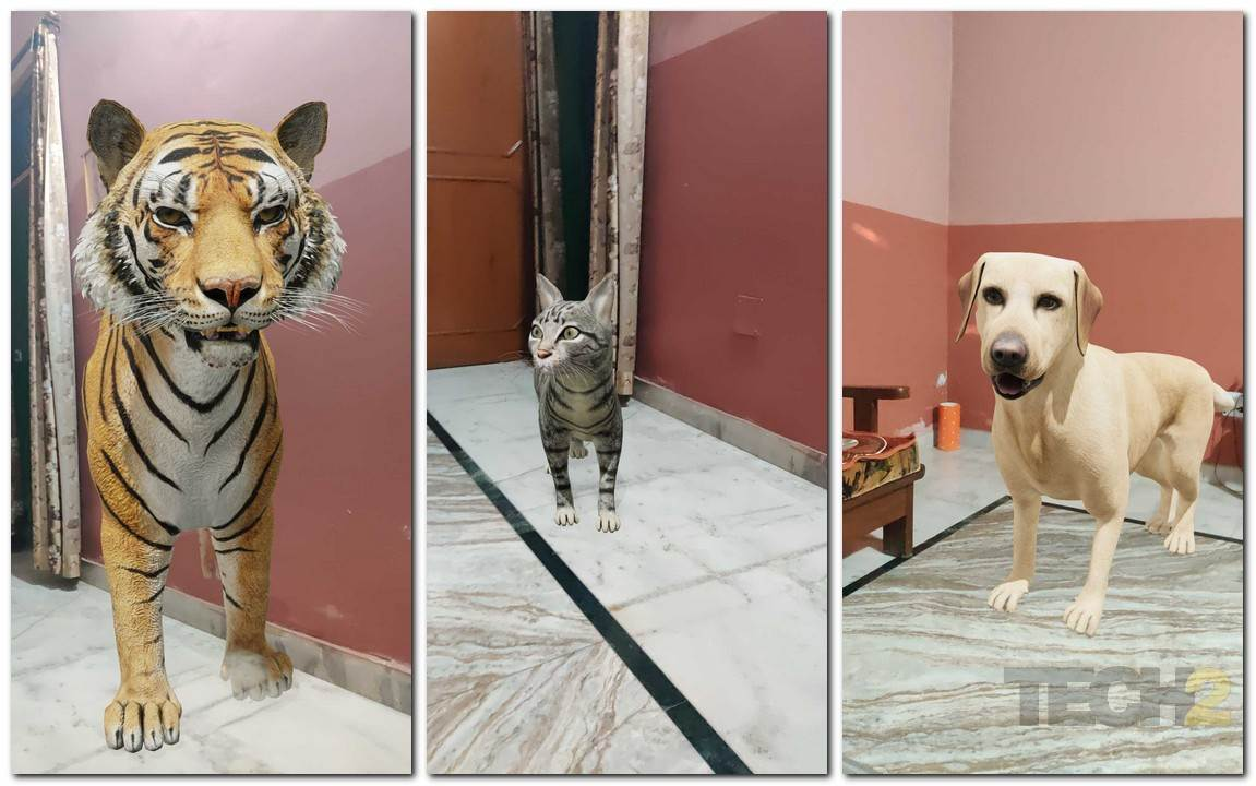 Google's S3 tiger, cat and dog.
