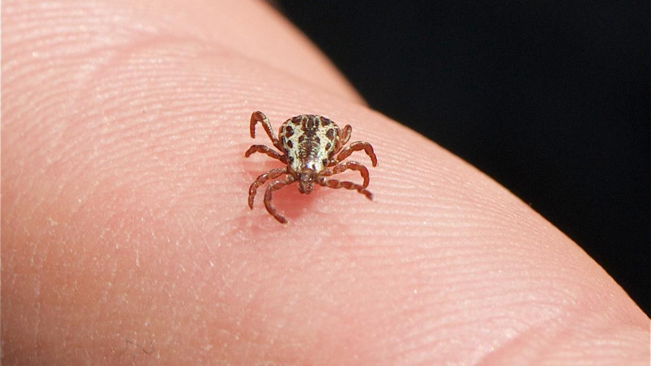 Ticks can infect both humans and pets with serious infections.