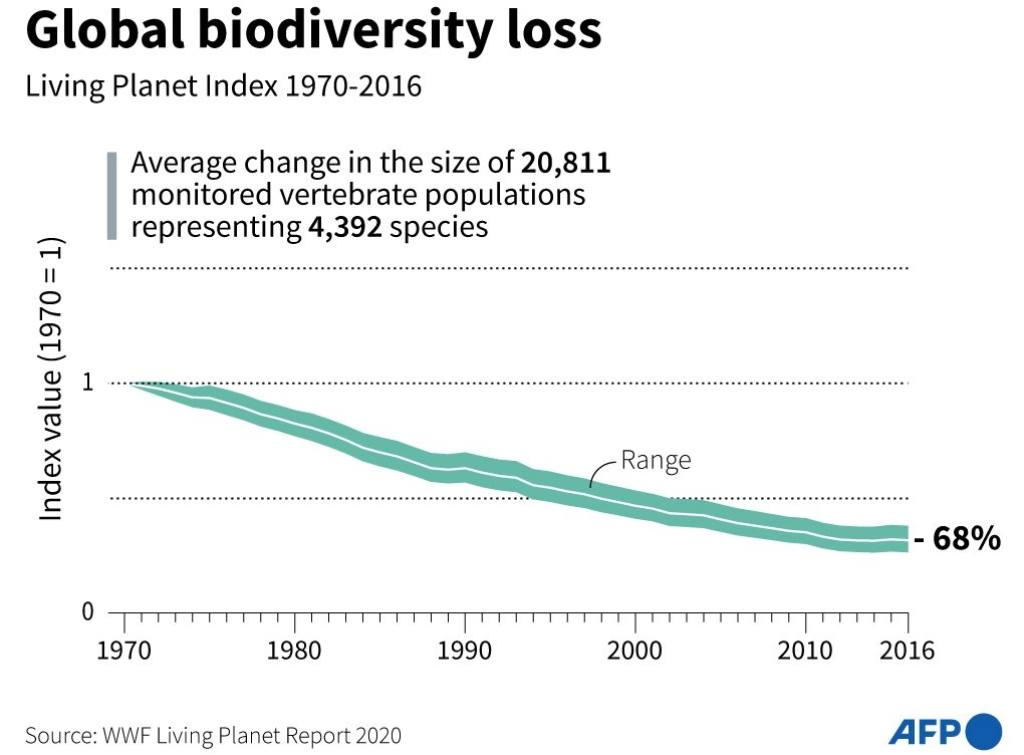 2020 targets under the 195-nation Convention on Biological Diversity to protect and restore Nature—including a slowdown in habitat loss. The scores of these targets have all been missed – in some cases, by a lot. Image Courtesy: AFP/WWF