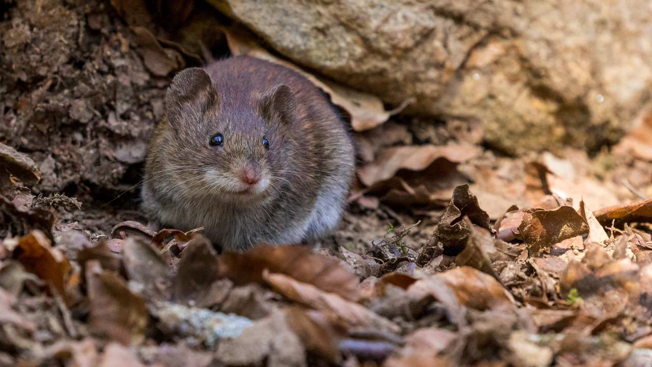 The study administered to mice two experimental compounds that can block the EP2 receptor and found it reversed the metabolic problems seen in older macrophages — restoring their more youthful behaviour and preventing destructive inflammatory activity.
