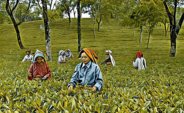 Amid the tea plantations of Jalpaiguri, West Bengal, what drives the hunt for 'witches'